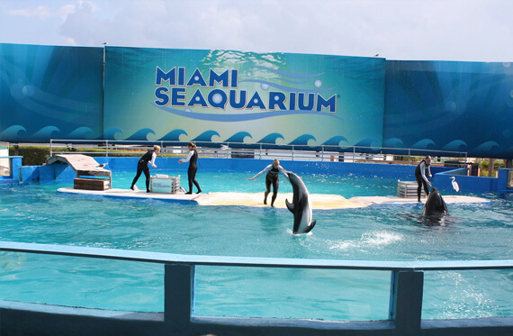 Miami Seaquarium - Romantic Ideas for Valentine's Day